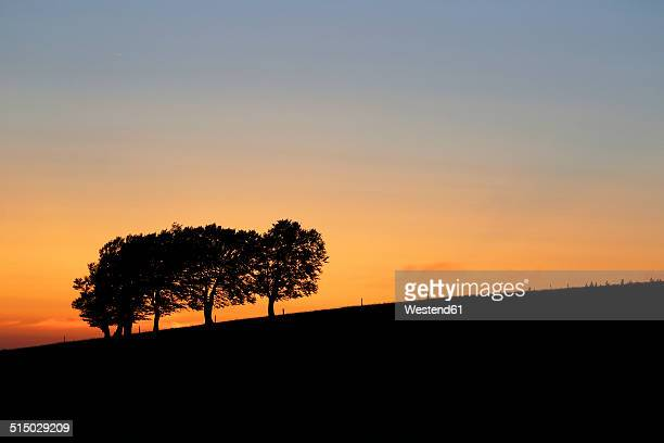 Germany, Black forest, Beech tree, Windswept trees in the evening
