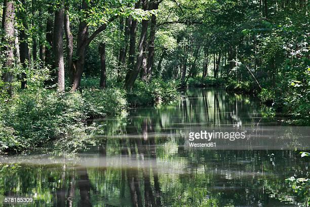 Germany, Brandenburg, Spreewald, River in the forest