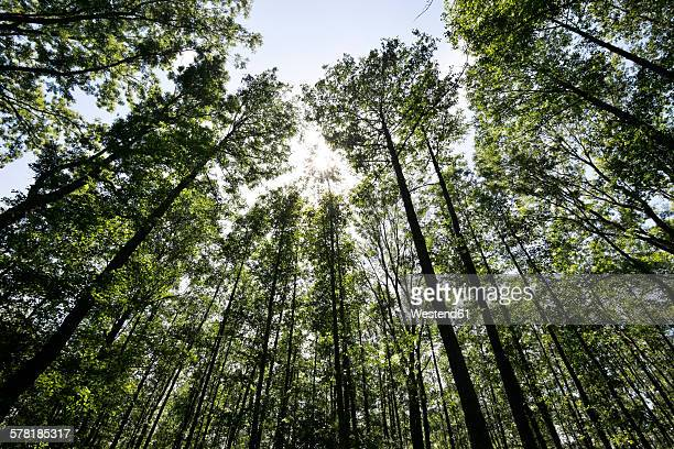 germany, brandenburg, spreewald, trees against the sun - spreewald stock pictures, royalty-free photos & images