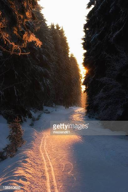 Germany, Braunlage, Road with fir forest in winter