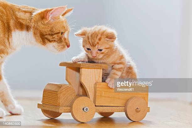 Germany, Cat looking at kitten sitting on wooden toy