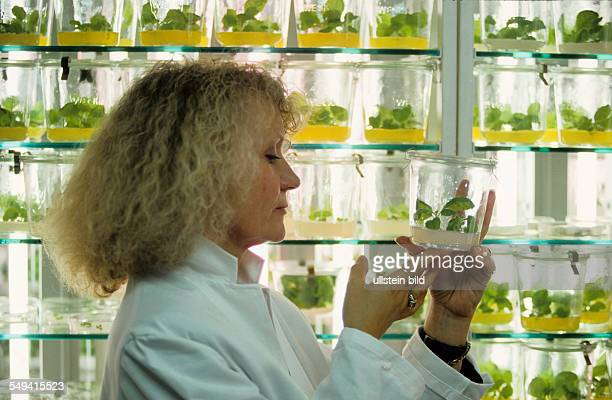 Germany Cologne gene technology genetically engineered potato plants in the clearance of the MaxPlanckInstitute