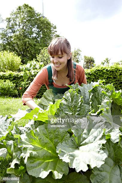 Germany, Cologne, Young woman cutting pieplant, smiling