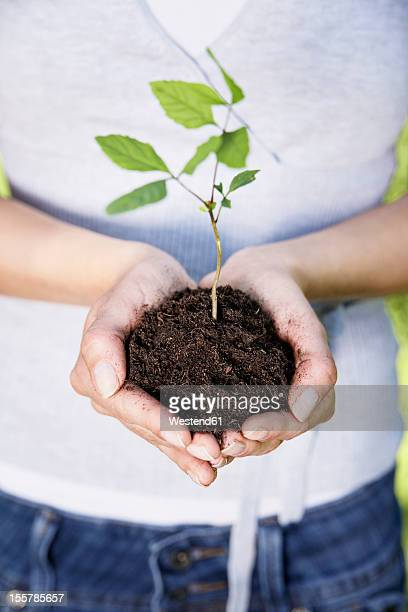 Germany, Cologne, Young woman holding seedling, close up