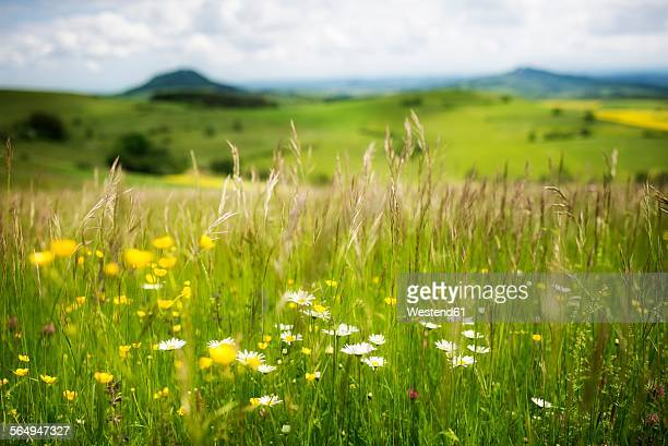 germany, constance district, landscape at springtime - wiese stock-fotos und bilder