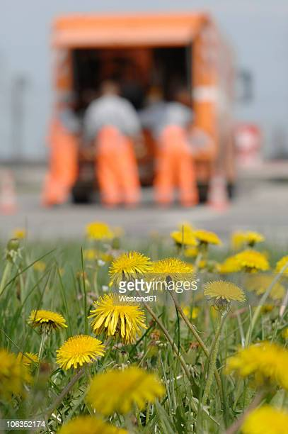 Germany, Dandelions with garbage truck and workers in background