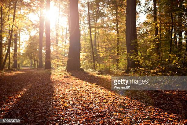 Germany, Duesseldorf, Benrath forest, Trees and sunshine in autumn
