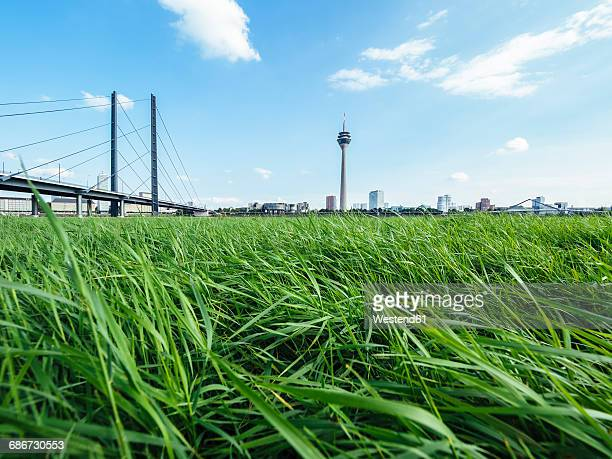 germany, duesseldorf, view to rhine bridge and rhine tower with meadow in the foreground - north rhine westphalia stock pictures, royalty-free photos & images