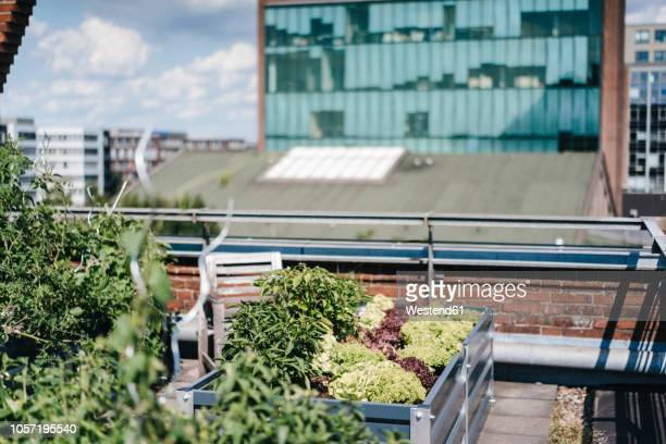 germany, duisburg, urban rooftop garden - urban garden stock pictures, royalty-free photos & images