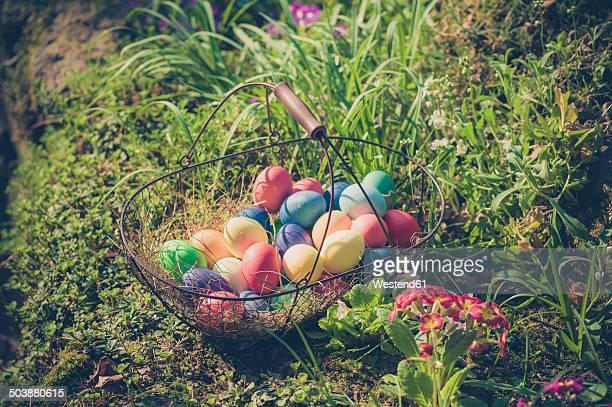 Germany, Easter eggs in wire basket in garden