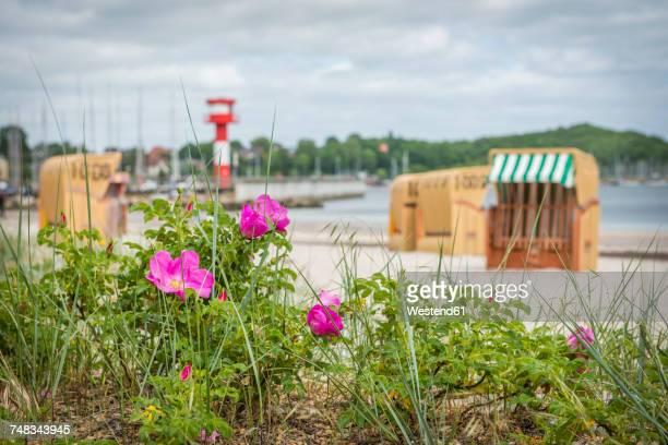 Germany, Eckernfoerde, view on the beach