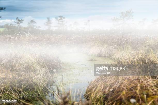 Germany, Fladungen, Black Moor, swamp landscape in fog