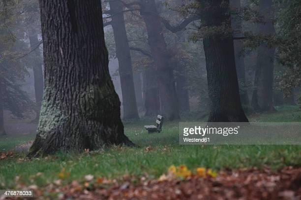 Germany, foggy oak forest in autumn