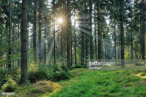 Germany, forest at Saxon Switzerland National Park