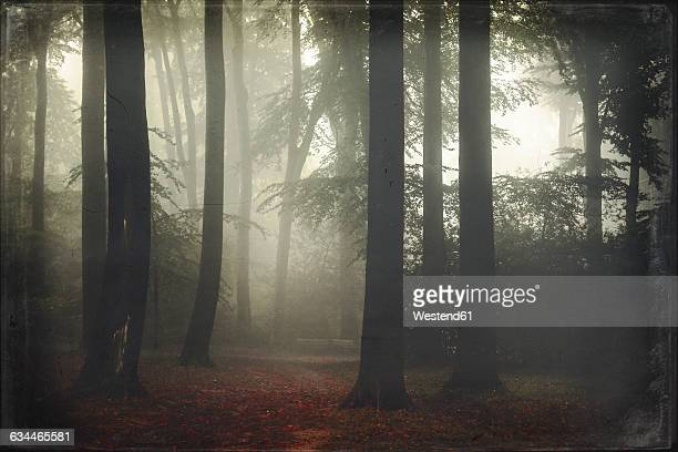 Germany, forest in fog