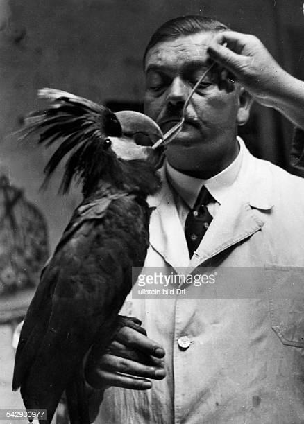 Germany Free State Prussia Berlin Berlin: Berliner Zoo- a veterinarian administering a sick Ara medicine - - Photographer: Herbert Hoffmann-...