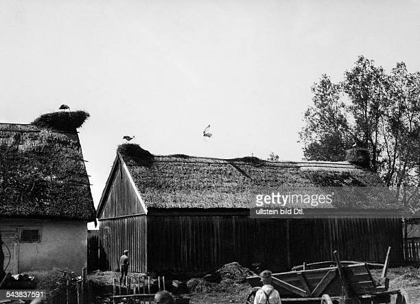 Germany Free State Prussia East Prussia Province Masuria farm near Labiau with seven stork's nests and thatched roofs 1934 Photographer...