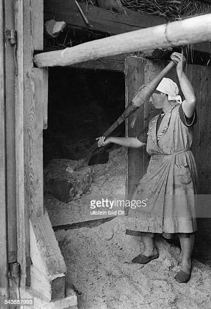 Germany Free State Prussia East Prussia Province Masuria Johannisburger Heide femalde farmer working an ice block stored for the summer with a giant...