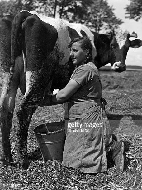 Germany Free State Prussia East Prussia Province Masuria woman milking a cow 1934 Photographer Seidenstuecker Vintage property of ullstein bild