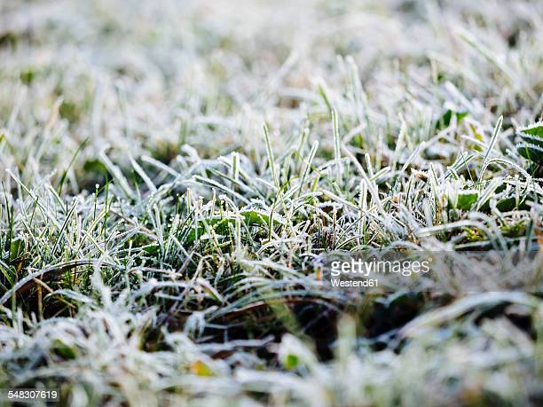 germany, frozen grass in winter - kälte stock-fotos und bilder