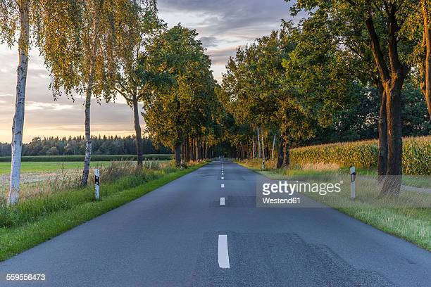 Germany, Gifhorn, tree-lined road in the evening