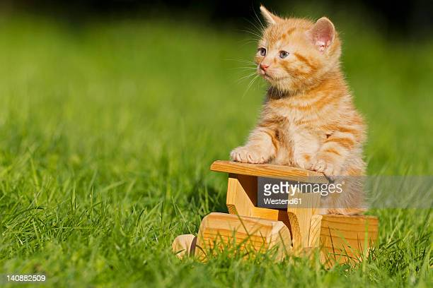 Germany, Ginger kitten sitting on wooden toy, close up