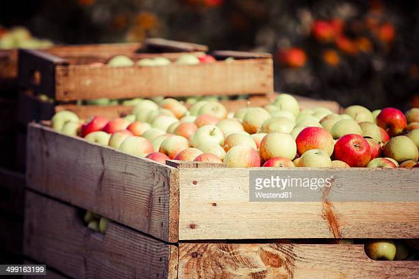 germany, hamburg region, harvested apples in crates - crate stock pictures, royalty-free photos & images