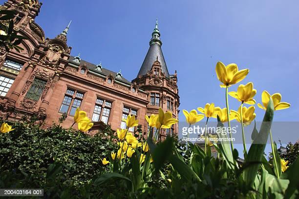 Germany, Heidelberg,  University of Heidelberg, flowers in foreground
