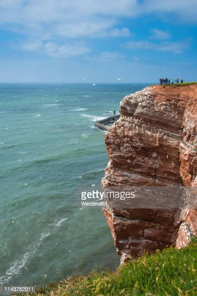 germany, helgoland island, northern gannet colony - helgoland stock pictures, royalty-free photos & images