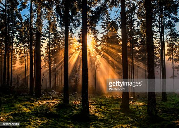 germany, hesse, feldberg, sunrise and morning mist - hesse germany stock pictures, royalty-free photos & images