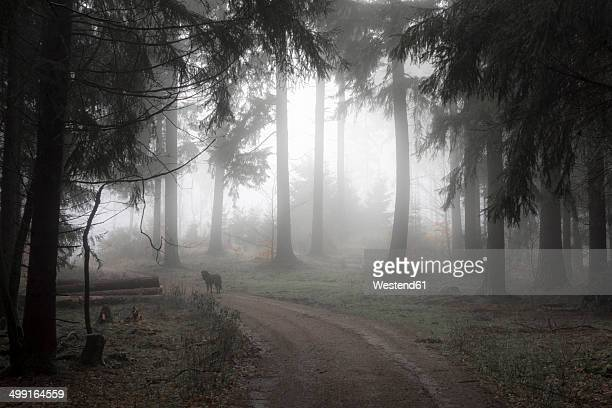 Germany, Hesse, fog in the nature park Taunus