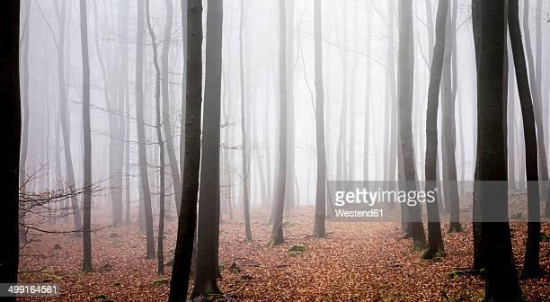 Germany, Hesse, fog in the nature park Taunus