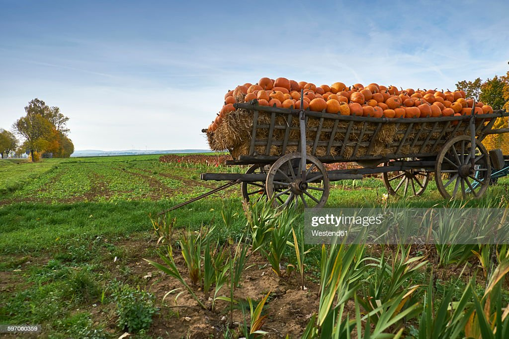 Germany, Kirchheimbolanden, harvested pumpkins on a cart : Stock Photo