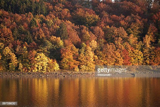 Germany, Langscheid, view to autumnal trees at lakeshore of Sorpe Dam