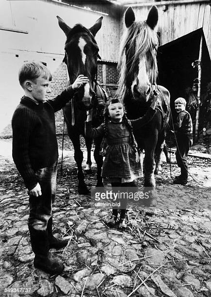 Germany little girl and her brothers on a farm in the yard of the farmhouse holding the two horses for the cart Lower Saxony
