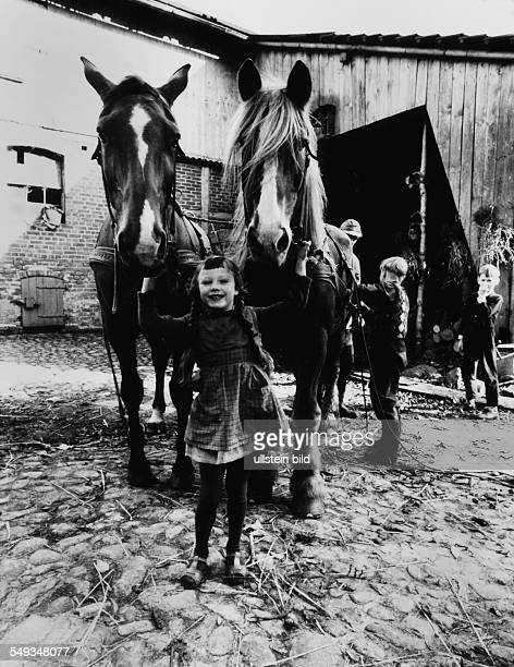 Germany little girl on a farm in the yard of the farmhouse holding the two horses for the cart Lower Saxony