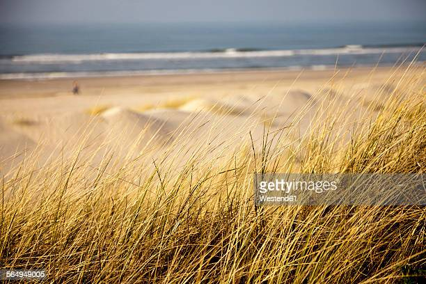 Germany, Lower Saxony, East Frisian Island, Spiekeroog, Dune with marram grass at beach