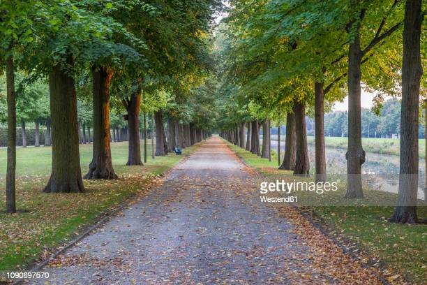 Germany, Lower Saxony, Hanover, Herrenhaeuser Gaerten, alley in autumn
