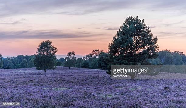 Germany, Lower Saxony, Heath district, Lueneburg Heath after sunset