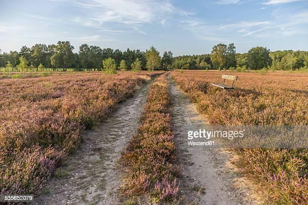 Germany, Lower Saxony, Heath district, Lueneburg Heath, bench by the wayside