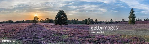Germany, Lower Saxony, Heath district, Lueneburg Heath
