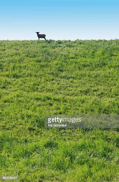 Germany, Lower Saxony, Lamb on dike, low angle view