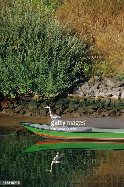 Germany Main River Near Hanau Great Blue Heron On Boat