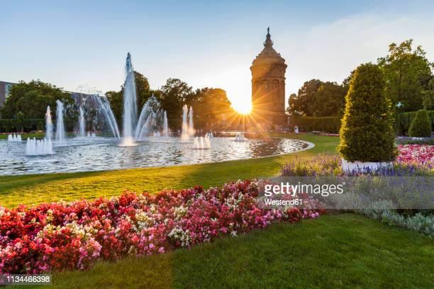 germany, mannheim, friedrichsplatz with fountain and water tower in the background by sunset - mannheim stock-fotos und bilder