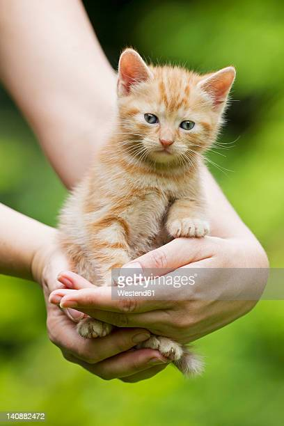 Germany, Mature woman holding Kitten, close up