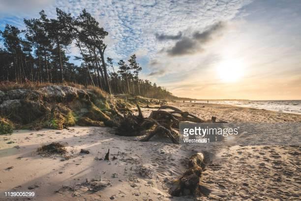 germany, mecklenburg-western pomerania, darss, ahrenshoop, west beach at sunset - fischland darss zingst photos et images de collection