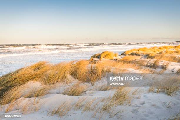 germany, mecklenburg-western pomerania, darss, prerow, north beach - mecklenburg vorpommern stock pictures, royalty-free photos & images