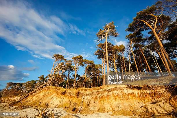 germany, mecklenburg-western pomerania, fischland-darss-zingst, coastal landscape - fischland darss zingst photos et images de collection
