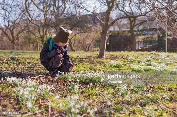 Germany, Mecklenburg-Western Pomerania, Ruegen, little boy crouching on meadow with snowdrops