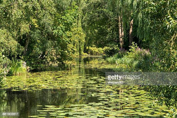 Germany, Moelln, spa park with lily pond